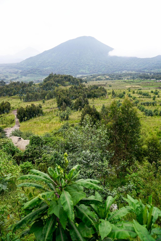 curio.trips.rwanda.volcanoes.np.volcano.view.jpg