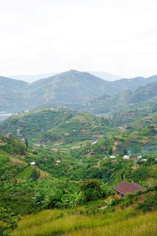 curio.trips.rwanda.thousand.hills.landscapes.portrait.jpg