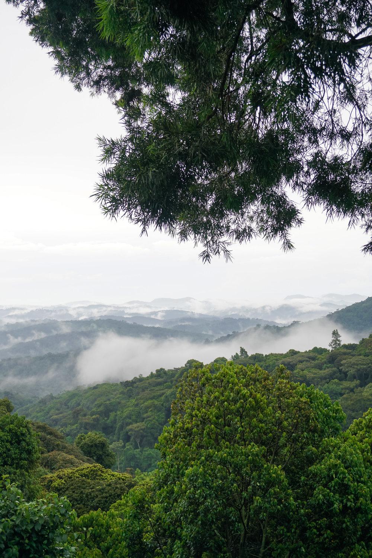 curio.trips.rwanda.nyungwe.np.rainforest.view.jpg
