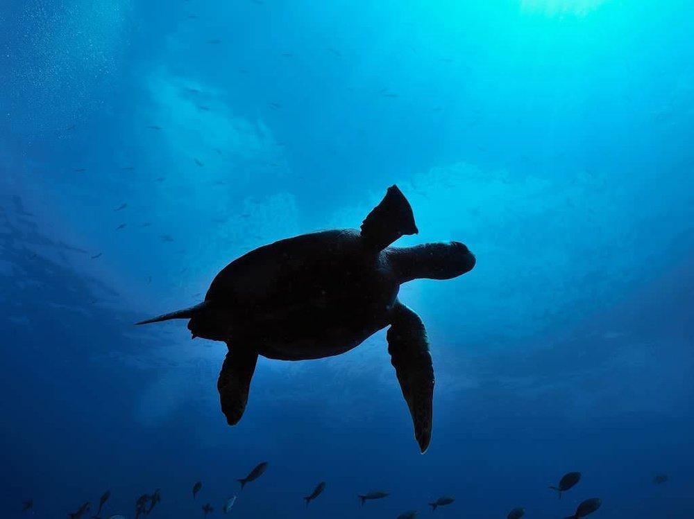 galapagos-safari-camp-turtle.jpg