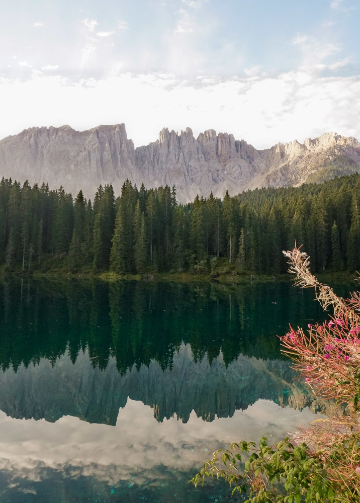curio.trips.italy.dolomites.lake.carezza.flowers.portrait.jpg