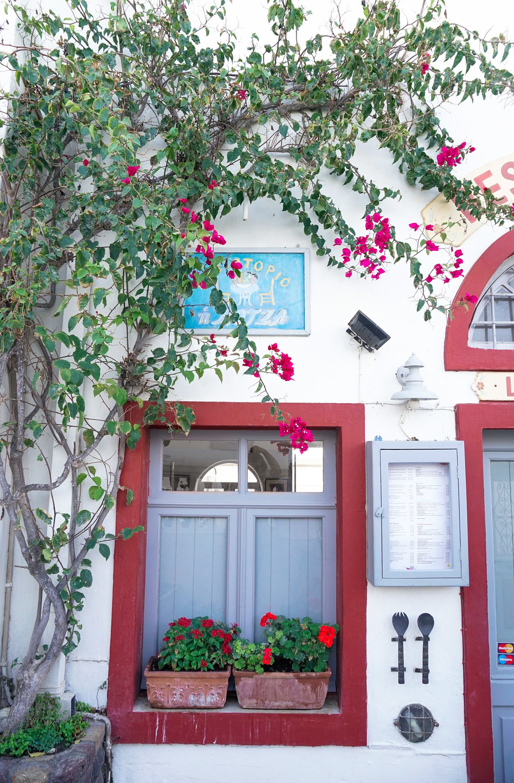 curio.trips.greece.santorini.pink.blue.flowers.architecture.portrait.jpg