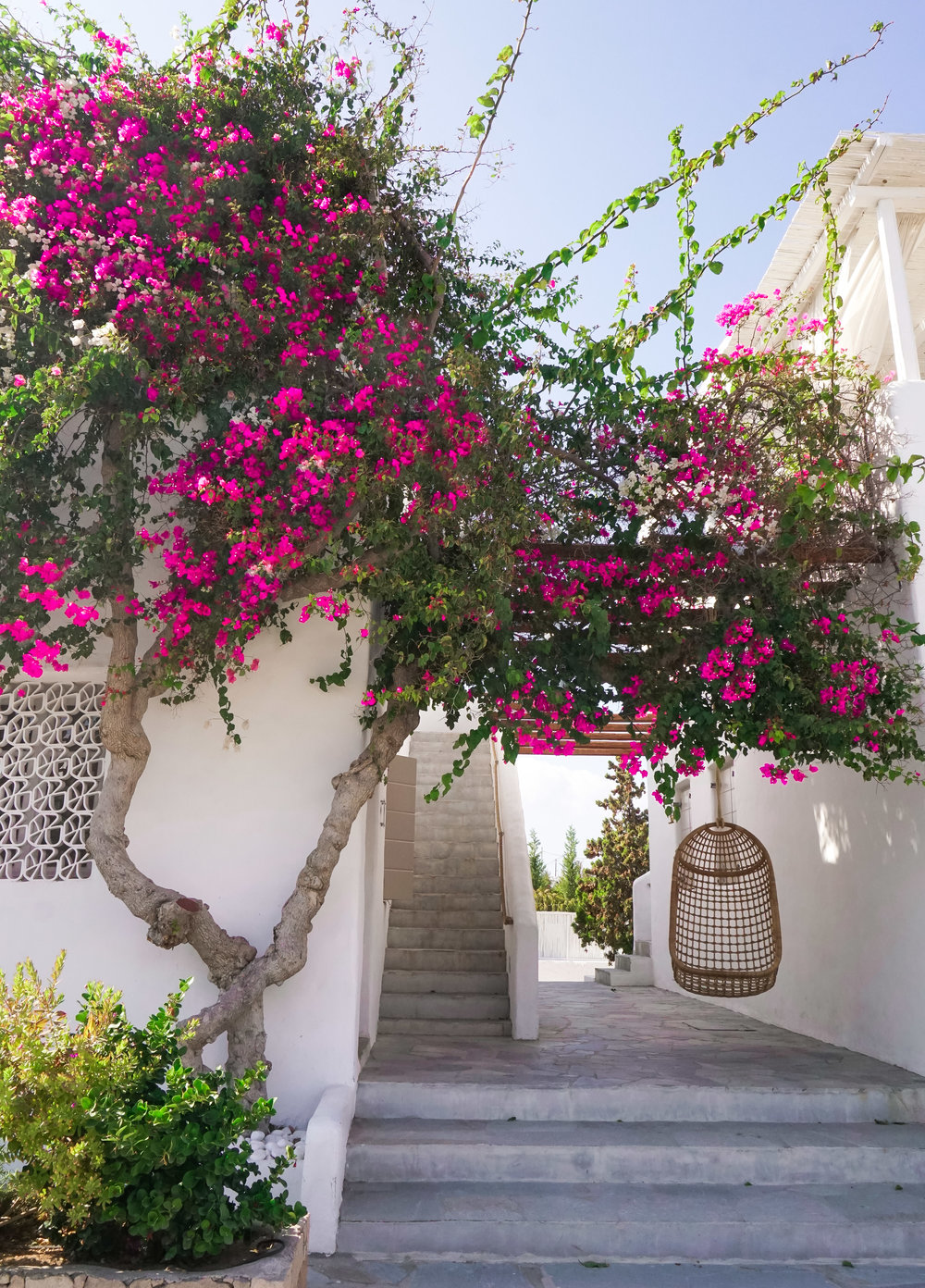 curio.trips.greece.white.buildings.pink.flowers.egg.seat.portait.jpg