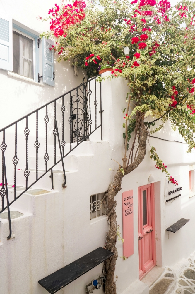 curio.trips.greece.paros.street.scene.white.building.flowers.portrait.jpg