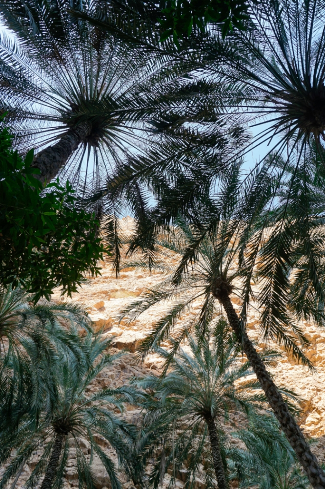 curio.trips.oman.wadi.oasis.palmtrees.above.portrait-3.jpg