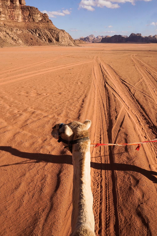 curio.trips.jordan.wadi.rum.camel.head.portrait.jpg