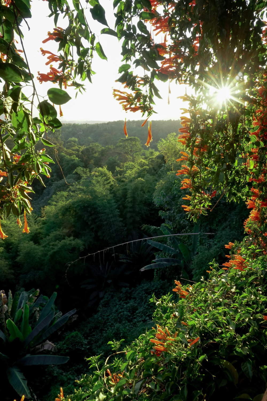 curio.trips.thailand.chiang.rai.hotel.room.sunset.view.portrait.jpg