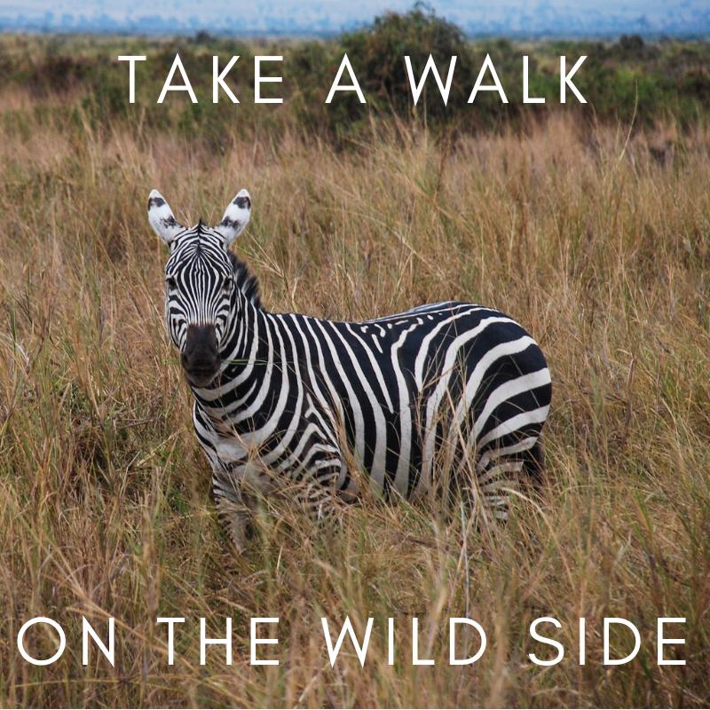 curio.trips.website.experiences.wildlife.encounters.png