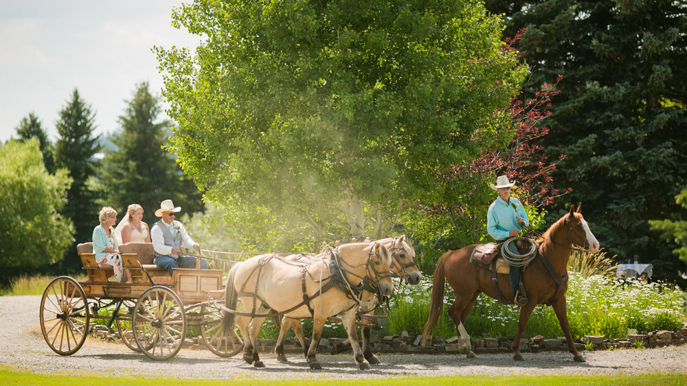 Bride in a horse drawn buggy, western Montana wedding.
