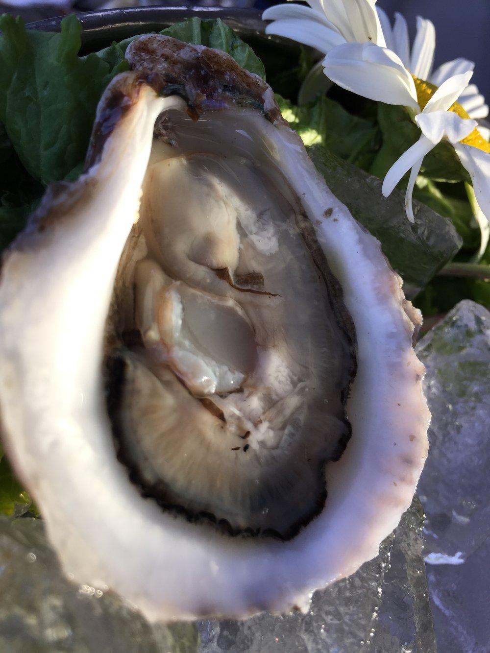 Naskatucket Oyster