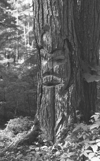 Gitxsan arborglyph, Michael Blackstock photo.png