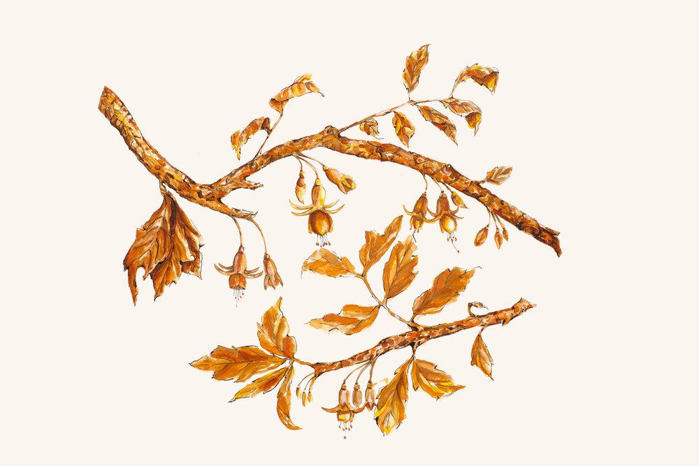estudo para estampa pássaros de outono [aquarela]