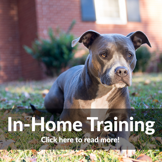 In Home Dog Training Options!