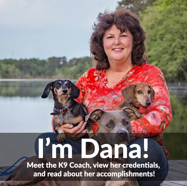 Meet the K9 Coach, Dog Training Expert