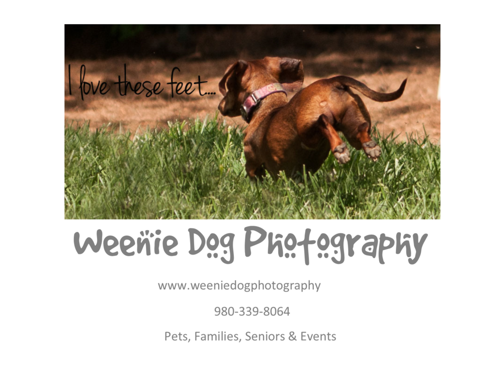 weeniedogphotography