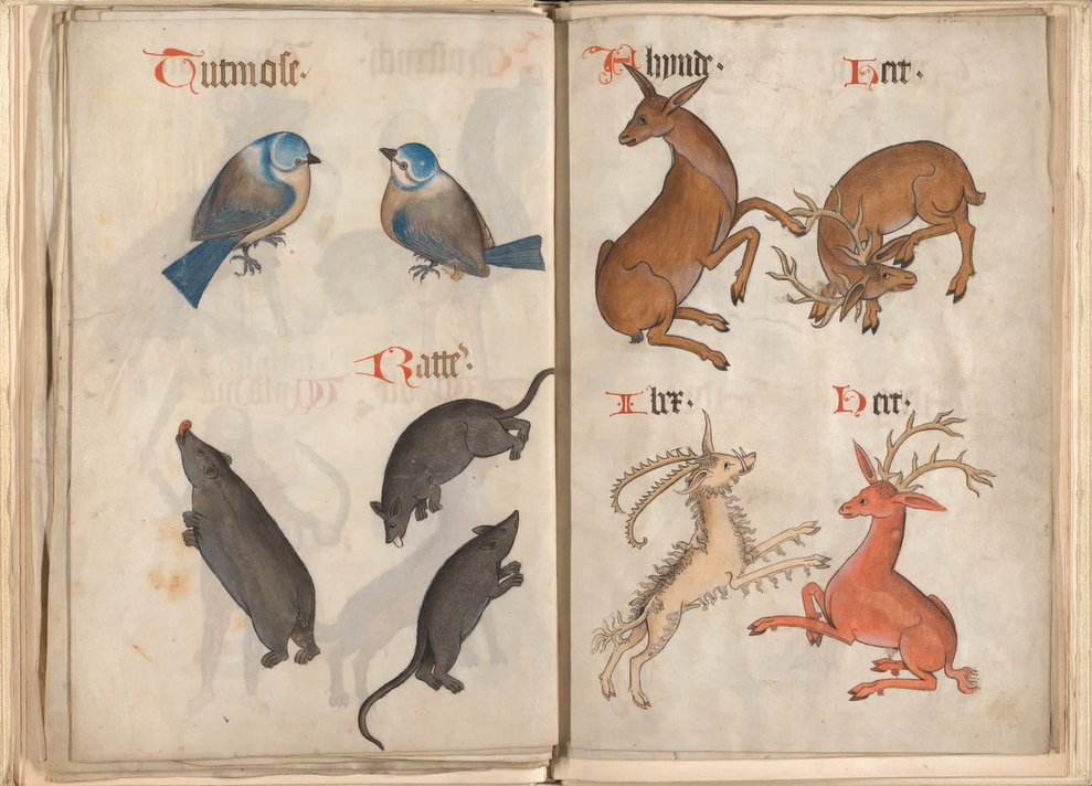 A page from the  Helmingham Herbal and Bestiary , depicting the Titmouse bird, Rats, and creatures of the deer family, including an Ibex.