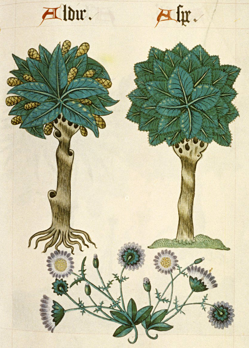 Ashmole's version of Alder and Ash, which, as you can see, follows Helmingham's quite closely.