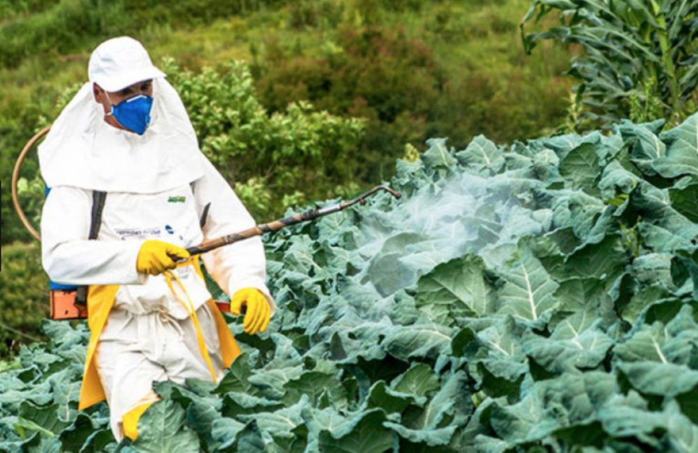 Pesticide spraying...