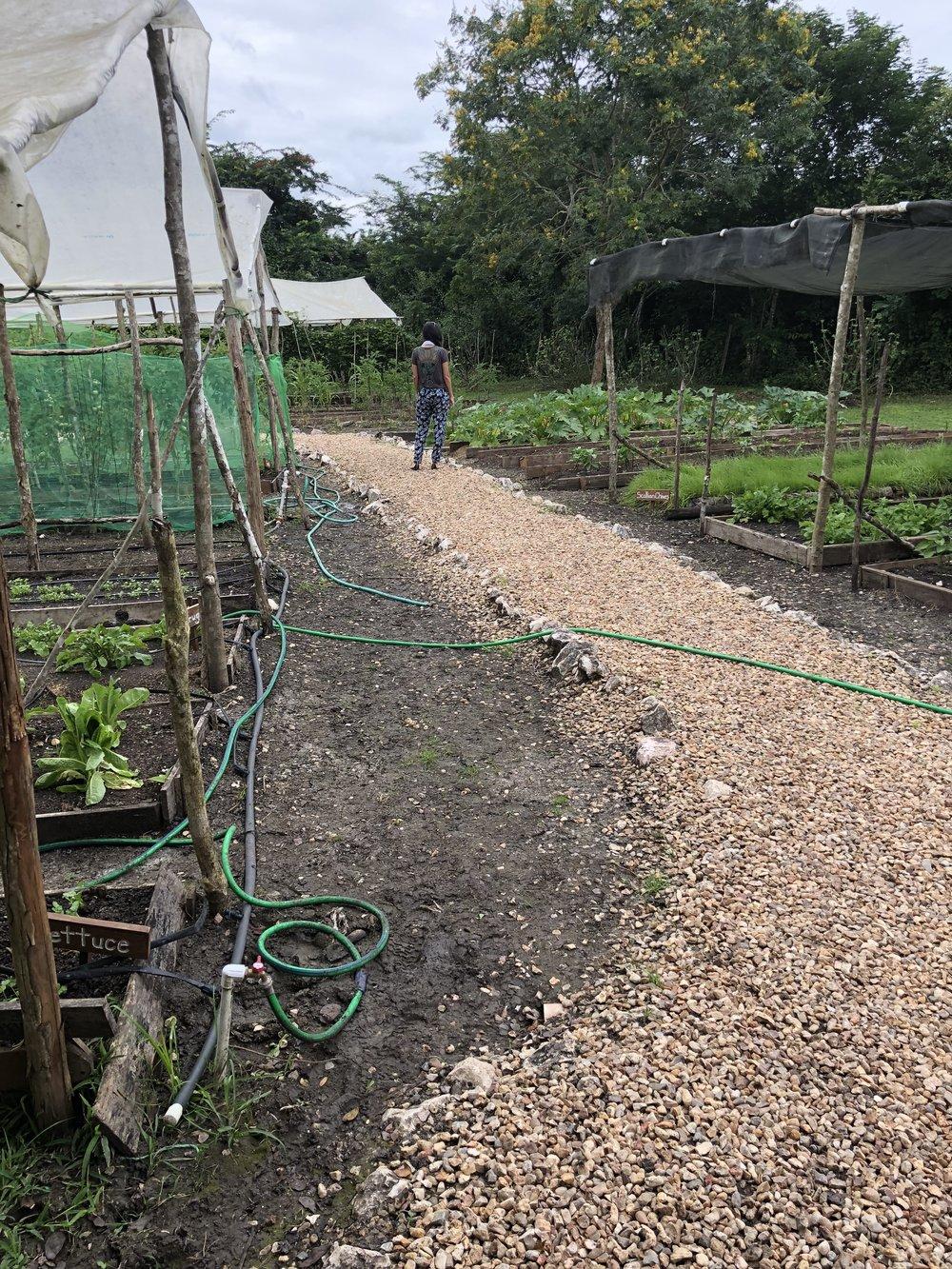 Ka'ana Organic Farm