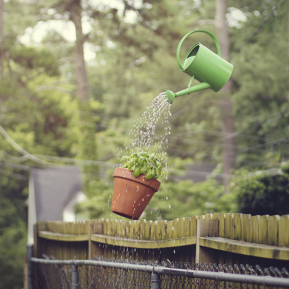 watering_plant_2.jpg