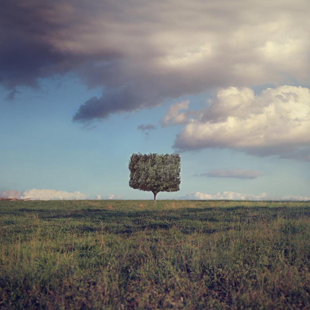 square tree crop.jpg