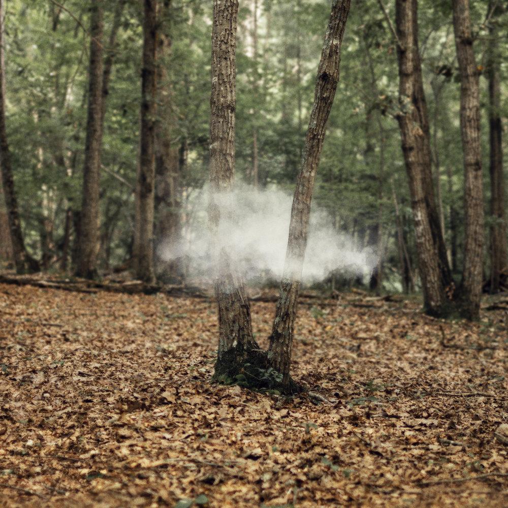 cloud_in_woods_4.jpg