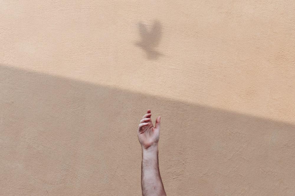 arm_bird_shadows.jpg