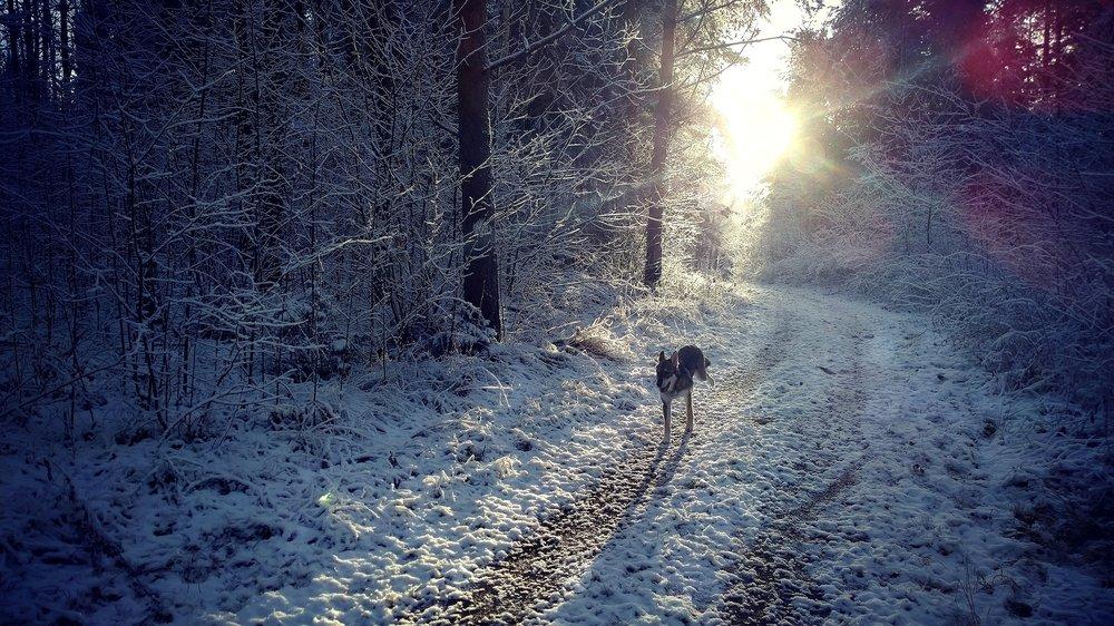 Pilgrim och den första snön