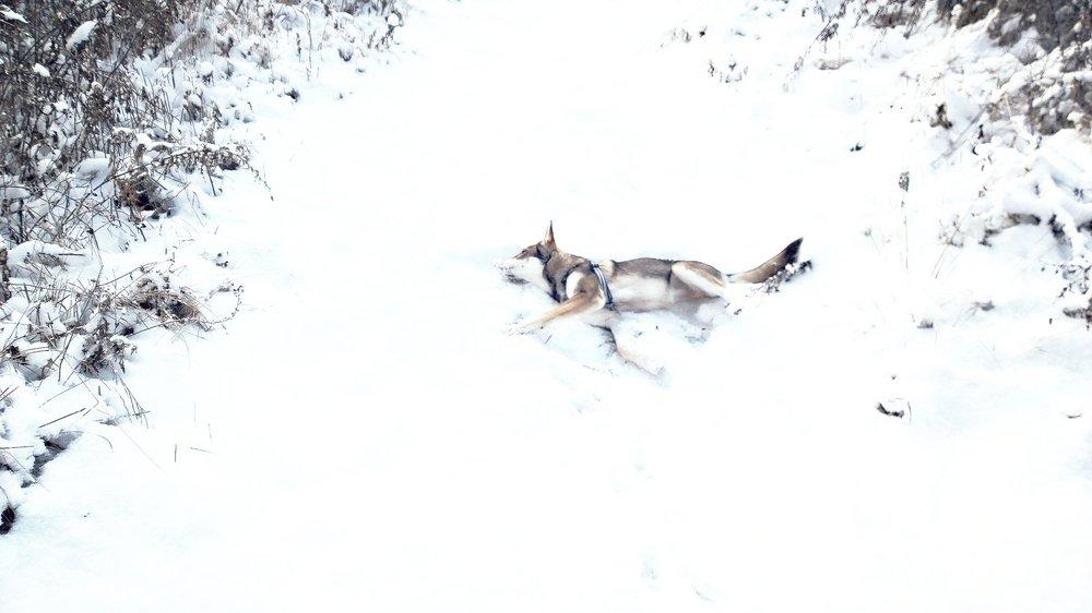 Snöbus