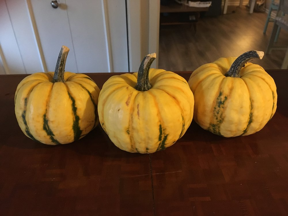 Miniature pumpkins (also know as gourds) grown at my parents house