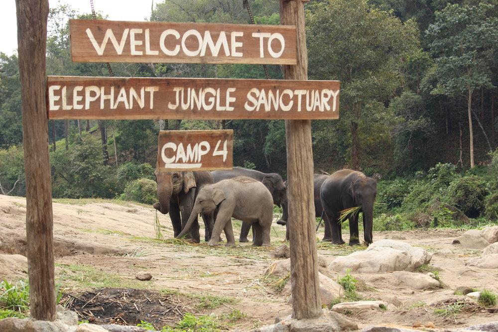 The beautiful & gentle giants of Camp 4