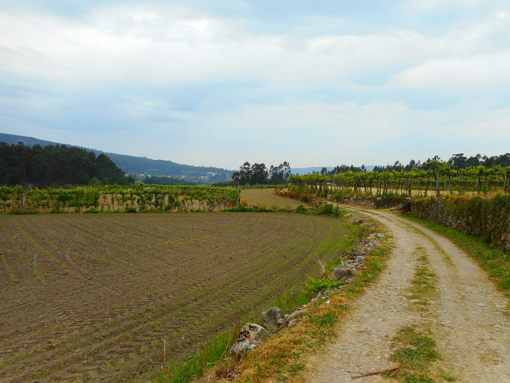 Walking through farmland and vineyards