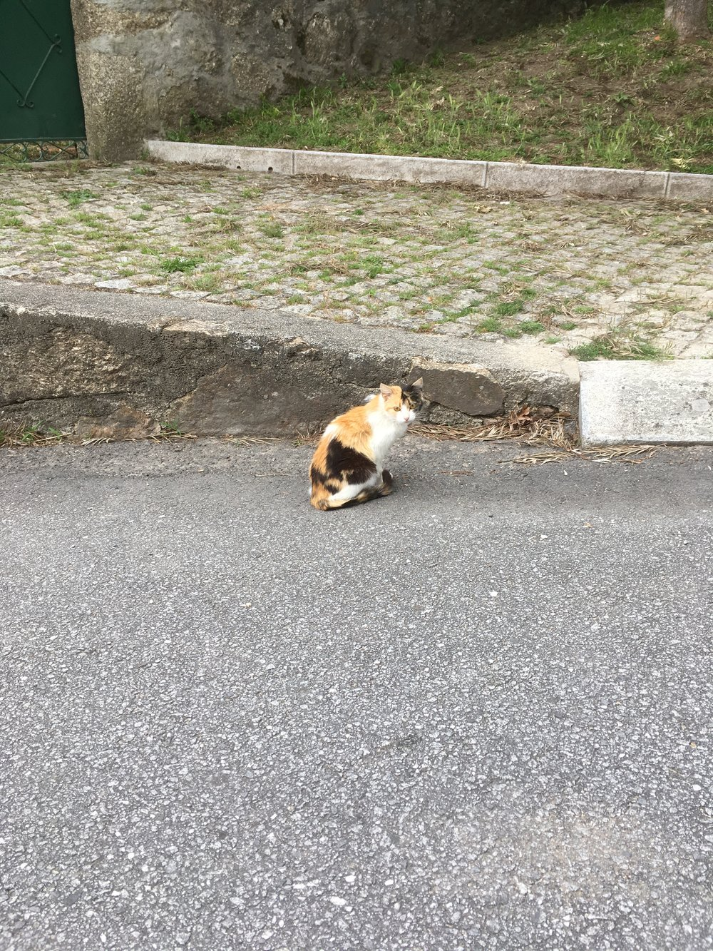 One of the many cats I saw along the way of the Camino