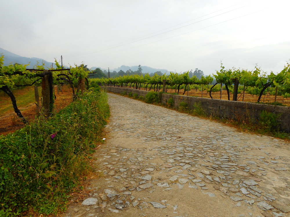 Some of the beautiful vineyards we walked through