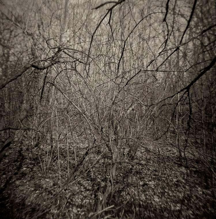 holga-woods.jpg