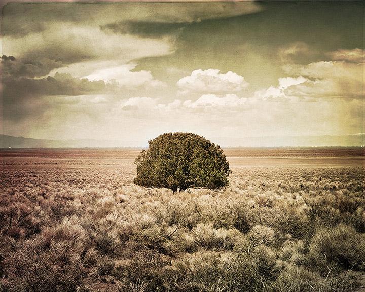 tree-for-b-web.jpg