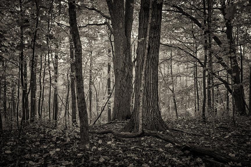 riverbend-woods-web.jpg