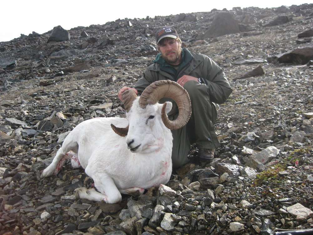 Dall sheep hunting is a challenge, and a passion of ours. Fair chase and respect all the way.