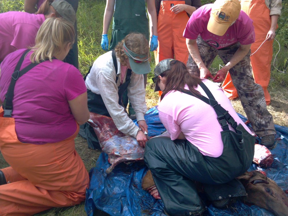 Alaska Becoming an Outdoors Woman Field Dressing Course