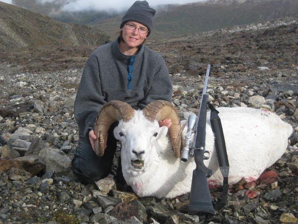 Chugach Dall Sheep