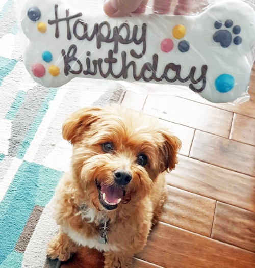 "Yay! For Food's extremely cute smiling dog, Teddy, looking a large bone-shaped treat labelled ""happy birthday"" on it."