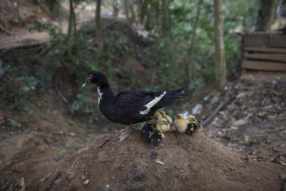 quetzal_00016.jpg