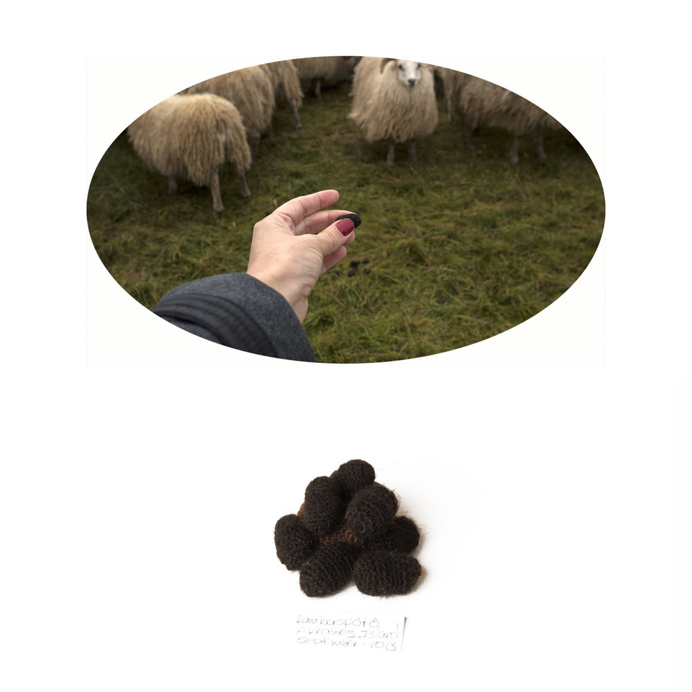 074SAMPLE-SHEEP-DROPPING.jpg