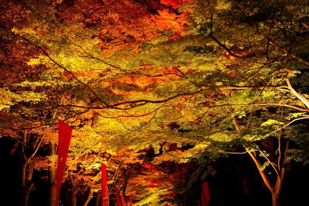 上田城跡公園のライトアップ。タイムスリップして、真田丸の世界へ・・・。  Photo/ Y.K