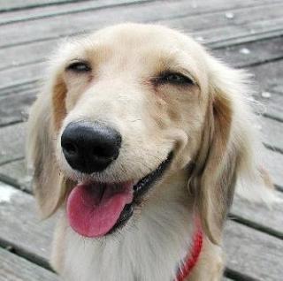 笑う犬.jpg