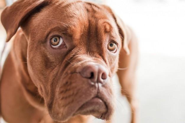 悲しい犬.jpg