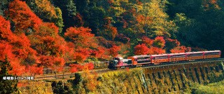 紅葉列車.jpg