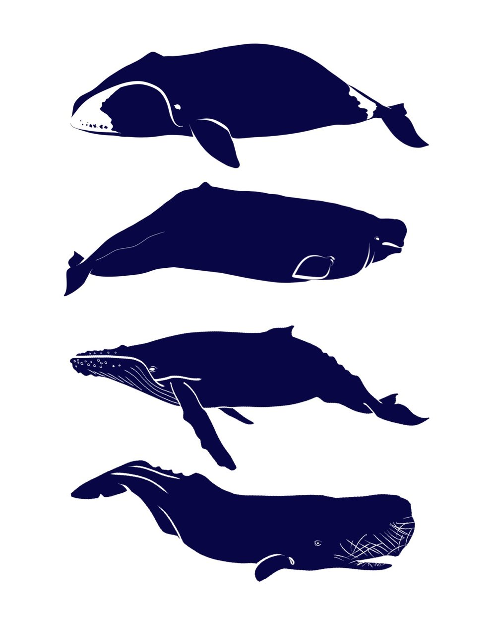 4 whales