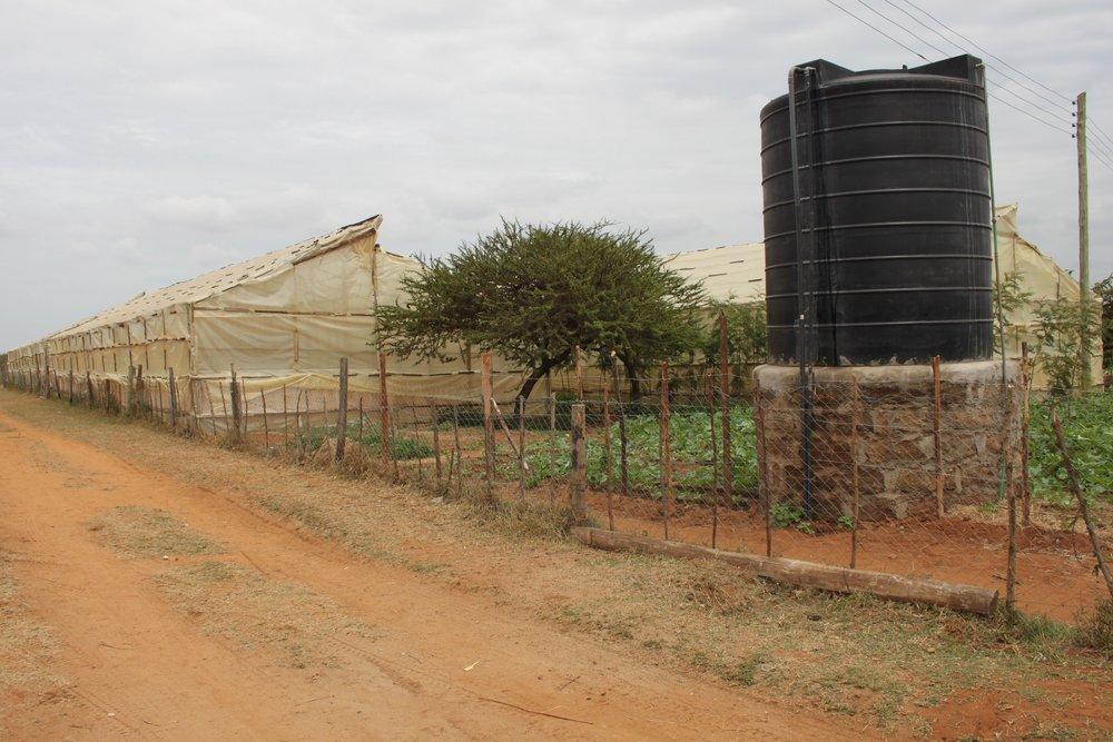 Water tank providing irrigation