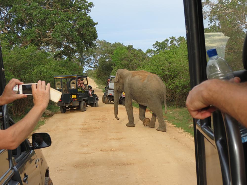srilanka elephat safari.jpeg